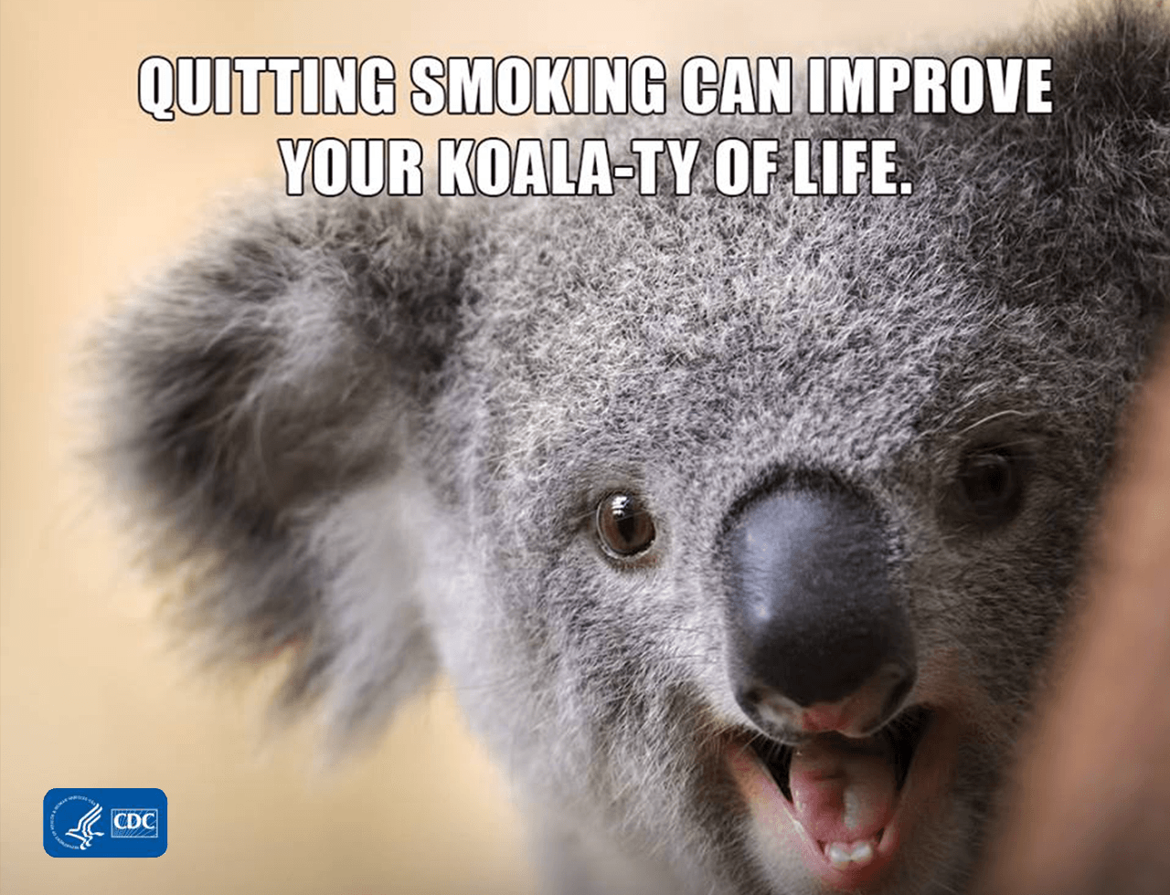 Image of koala with text quitting smoking can improve your koala-ty of life.