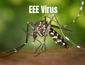EEE-Concern-text over mosquito biting skin
