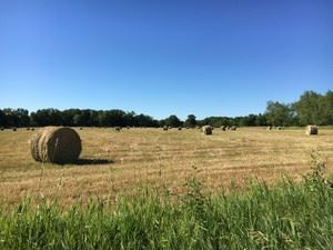 Staebler Farm with Haybales
